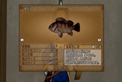 魚図鑑-メバル05