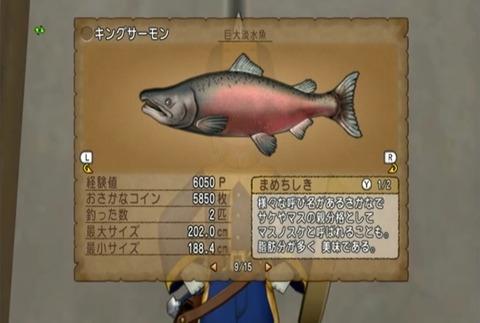 魚図鑑-キングサーモン10