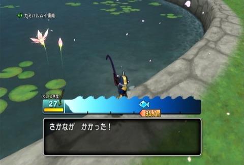 魚図鑑&コイ黒02