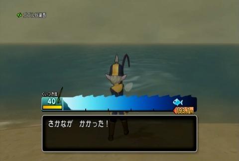 魚図鑑&オウムガイ02