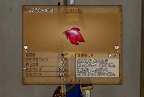 魚図鑑&ゴクラクギョ・赤02