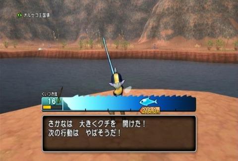 魚図鑑-ムベンガ05