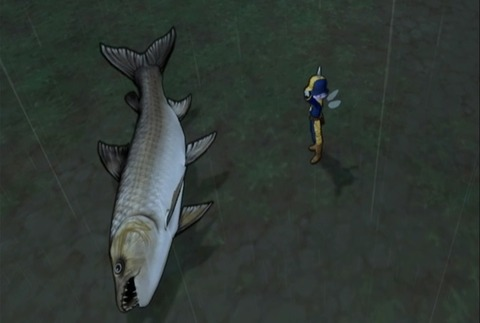魚図鑑-ムベンガ12