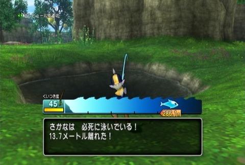 魚図鑑-キングサーモン03