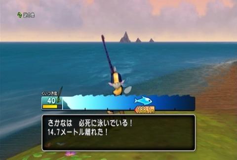 魚図鑑&ホシザメ03