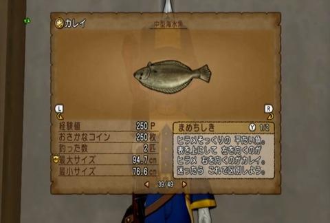 魚図鑑&カレイ05