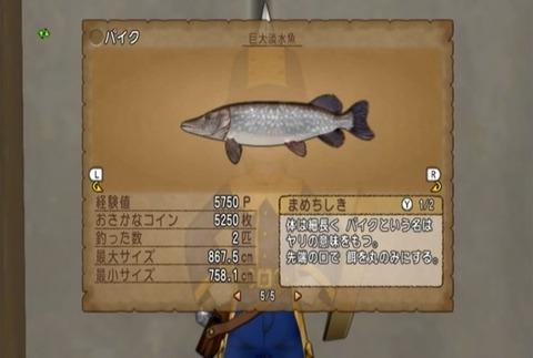 魚図鑑&パイク06