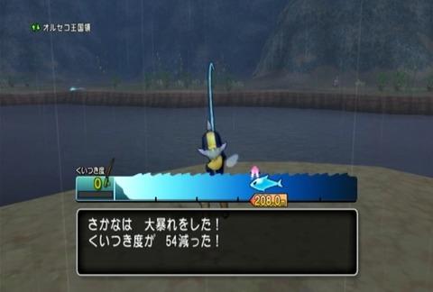 魚図鑑-ムベンガ08