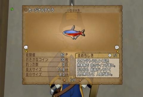 魚図鑑-カージナルテトラ05