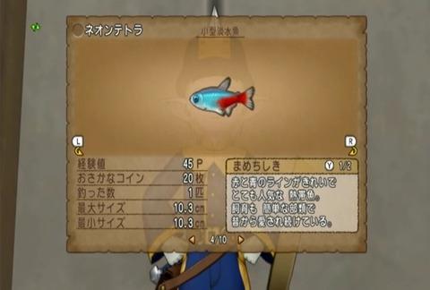 魚図鑑-ネオンテトラ06