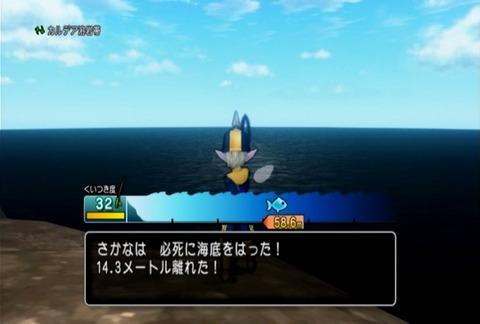 魚図鑑-ヤドカリ03