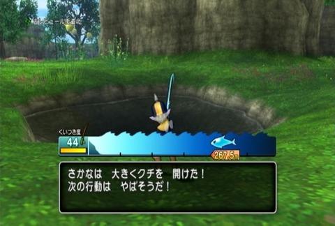 魚図鑑-キングサーモン05