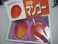 道−まんごー