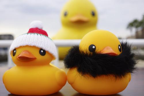 NEX-7 Photo - Rubber Duck