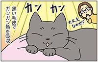 動物チーム36話-ss