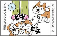 動物チーム31話-ss