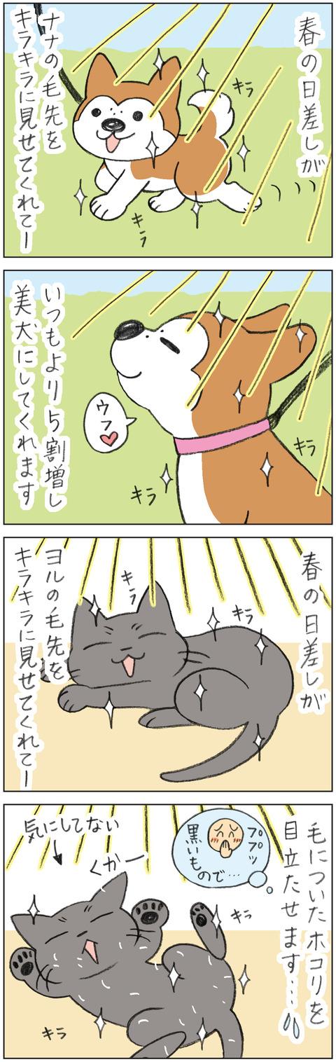 動物19-0165