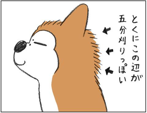 動物00506