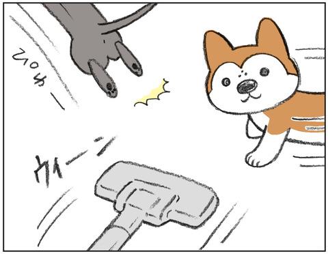 動物00436