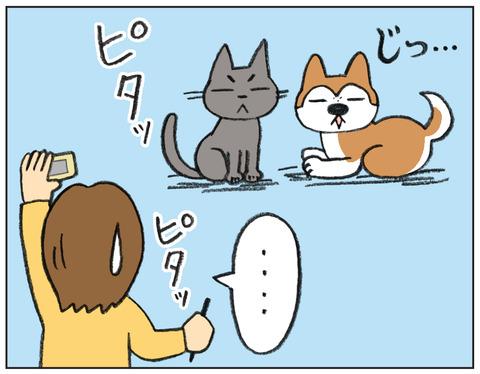 動物00526