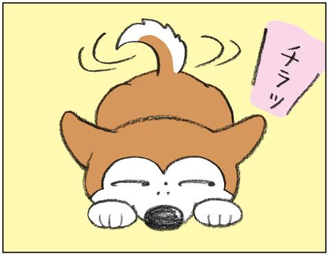 動物00469