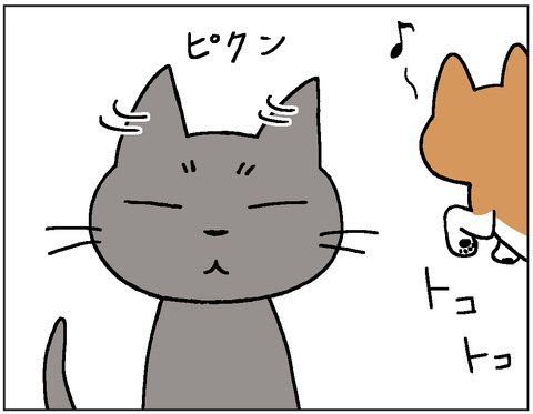 動物00417