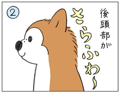 動物00537