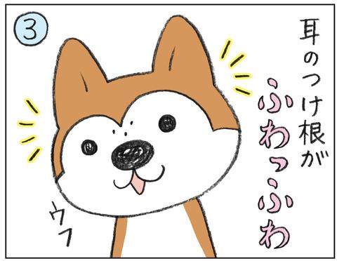 動物00538