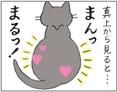 動物00541
