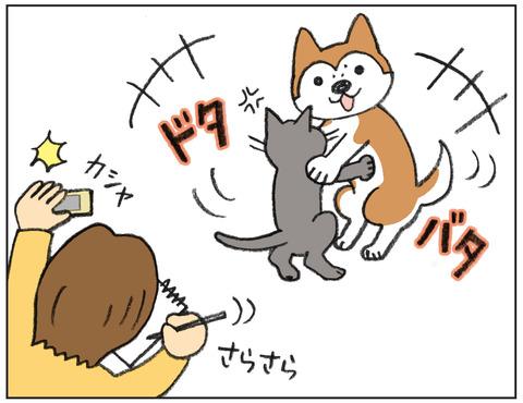 動物00525