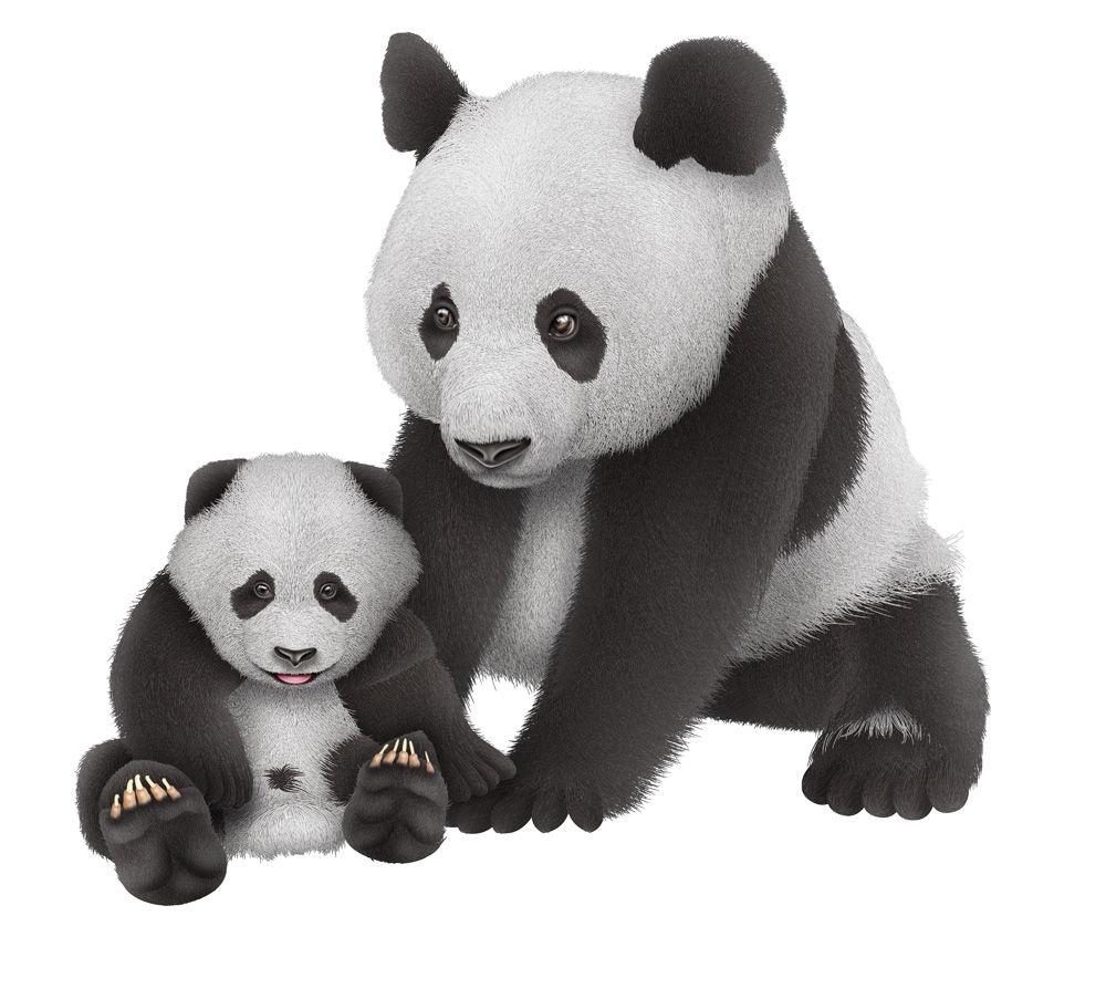 ジャイアントパンダの成長過程 : 世界の動物達を透視リアルイラストで