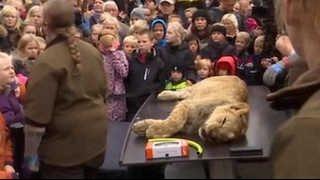 オーデンセ動物園ライオン