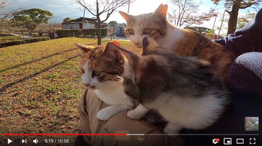 感動猫動画_子猫をナデナデしたら膝の上に乗ってきた