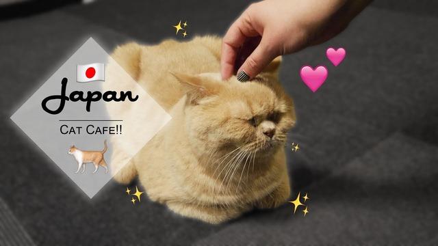 猫カフェきゃりこ