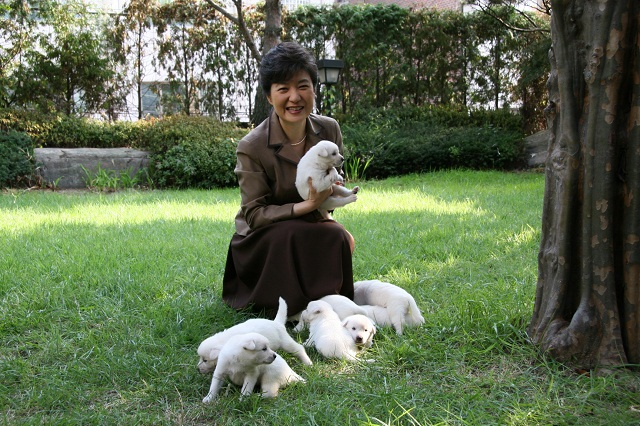 朴槿恵9匹の犬