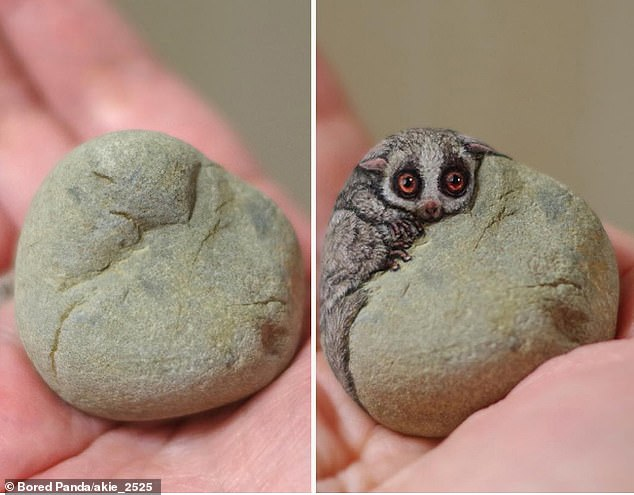 Before_and_after_This_little_guy_appears_to_look_over_a_rock_in