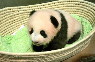 シャンシャン上野動物園パンダ