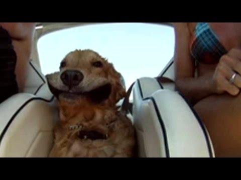 風と戦う犬