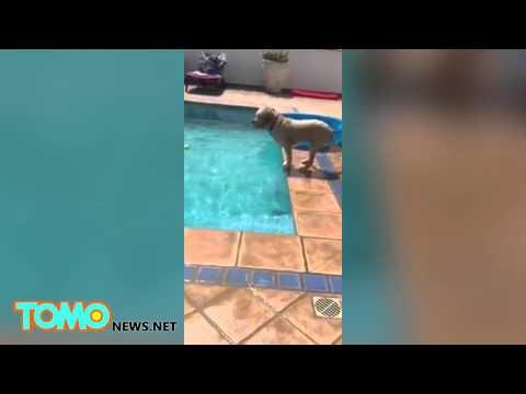 ボール犬プール