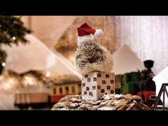 ハリネズミのクリスマス
