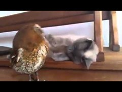 ネコの友達はフクロウ