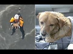 犬ロサンゼルス救出