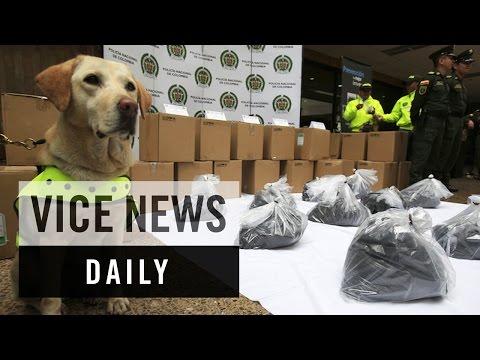 麻薬探知犬コロンビア