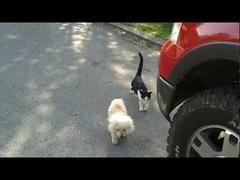 目の見えない犬を助ける猫