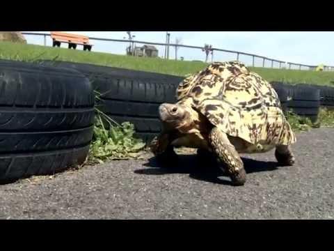 バーティ亀ギネス世界記録