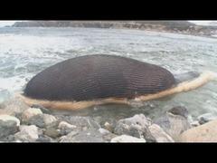 シロナガスクジラ爆発