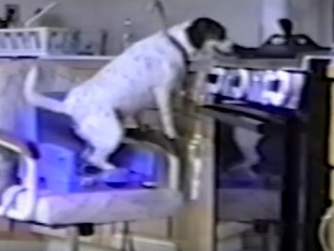 つまみ食い犬