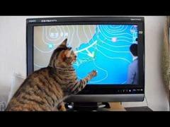 猫NHK天気予報