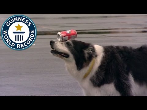 ギネス犬100m缶