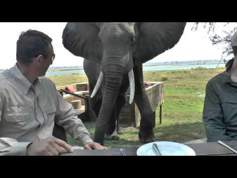 マナ・プールズ象